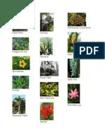 ARPL plants and pavements