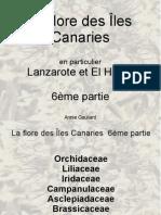 La Flore Des Iles Canarie