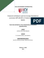 Producción de biodiesel a partir de Scenedesmus spp.