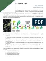 Ficha de DNA e Sintese Proteica