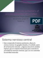Función del sistema sensorial y el sistema autónomo.pptx
