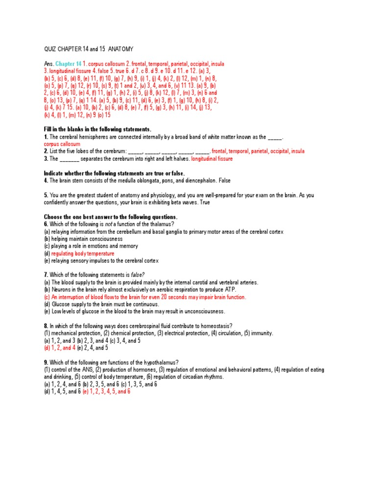 Quiz Chapter 14 and 15 Anatomy | Autonomic Nervous System | Cerebrum