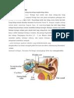 Anatomi Dan Fisiologi Pendengaran