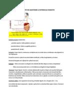 Curs 1 Elemente de Anatomie a Sistemului Digestiv
