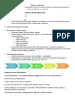 Estructura funcional de la hipófisis o glándula pituitaria