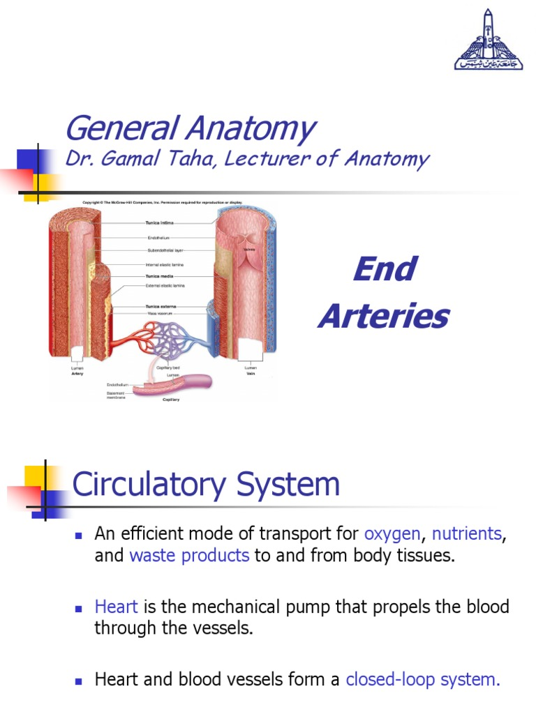 General anatomy, End Arteries | Capillary | Vein