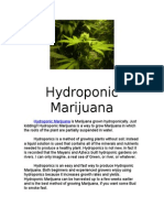 18941199 Hydroponic Marijuana