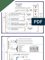 Mapa de Procesos Estructurales