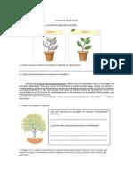 Guía Sobre las plantas