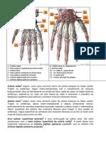 anatomia irrigação da mão leolina e maklene