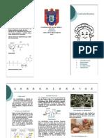 Carbohidratos Pequeño folleto sintetizado