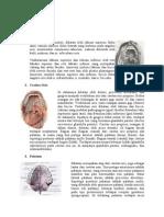 anatomi mulut