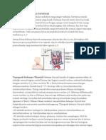 Anatomi Thyroid