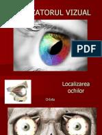 Analizatorul vizual - segmentul receptor