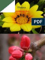 Floarea - alcatuire