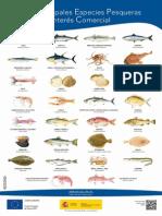Cartel 30 Principales Especies 48x68 Tcm5-50327