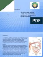 ovulacion, mestruacion y fecundacion.pptx equipo 3