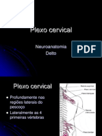 Plexo Cervical