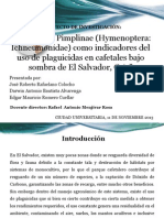 Las avispas Pimplinae (Hymenoptera.pptx