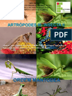 Artropodes III - Insecta II