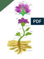 Partes de Una Planta y Flor