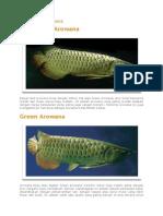 Jenis- Jenis Ikan Kelisa