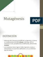 Mutagenesis Coimbra