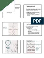 REPLICACIONYREPARACION20DNA[1]