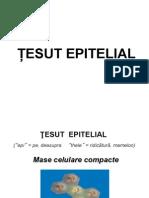 Curs Tesut Epitelial Studenti(2013)