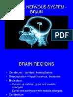 13 Central Nervous System