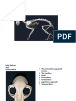 60294281 Cat Skeletal System
