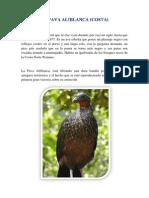 Animales de La Costa Sierra y Selva Del Peru en Peligro de Extinsion