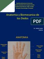 Anatomia y Biomecanica de Lo Dedos
