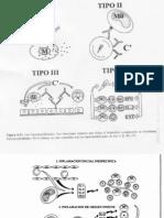 inmunidad_especifica_parasitos