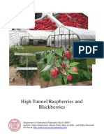 High Tunnels Raspberries