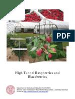 High Tunnels Raspberries