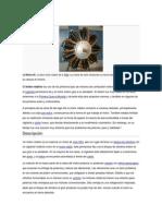 Diferencias Entre MCIA y R.