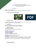 Informe de Campanula.(1)