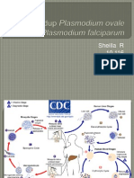 Siklus Hidup Plasmodium Ovale Dan Plasmodium Falciparum