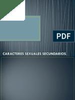 Los Caracteres Sexuales Primarios