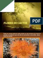 9 Flores Do Cactus
