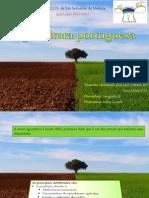 Trabalho Geografia a-Agricultura Portuguesa