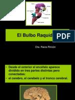 Bulbo Raquideo