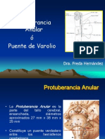 Protuberancia Freda