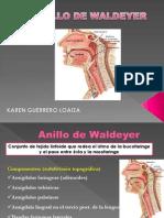 Anillo de Waldeyer 2013