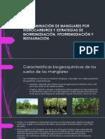 CONTAMINACIÓN DE MANGLARES POR HIDROCARBUROS Y ESTRATEGIAS DE