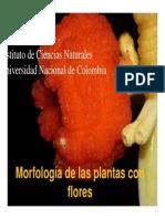 4. Morfología de Angiospermas
