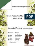 Manggis (Garcinia mangostana)