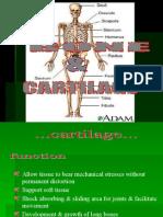 Bone n Cartilage