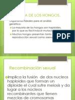 GENÉTICA DE LOS HONGOS